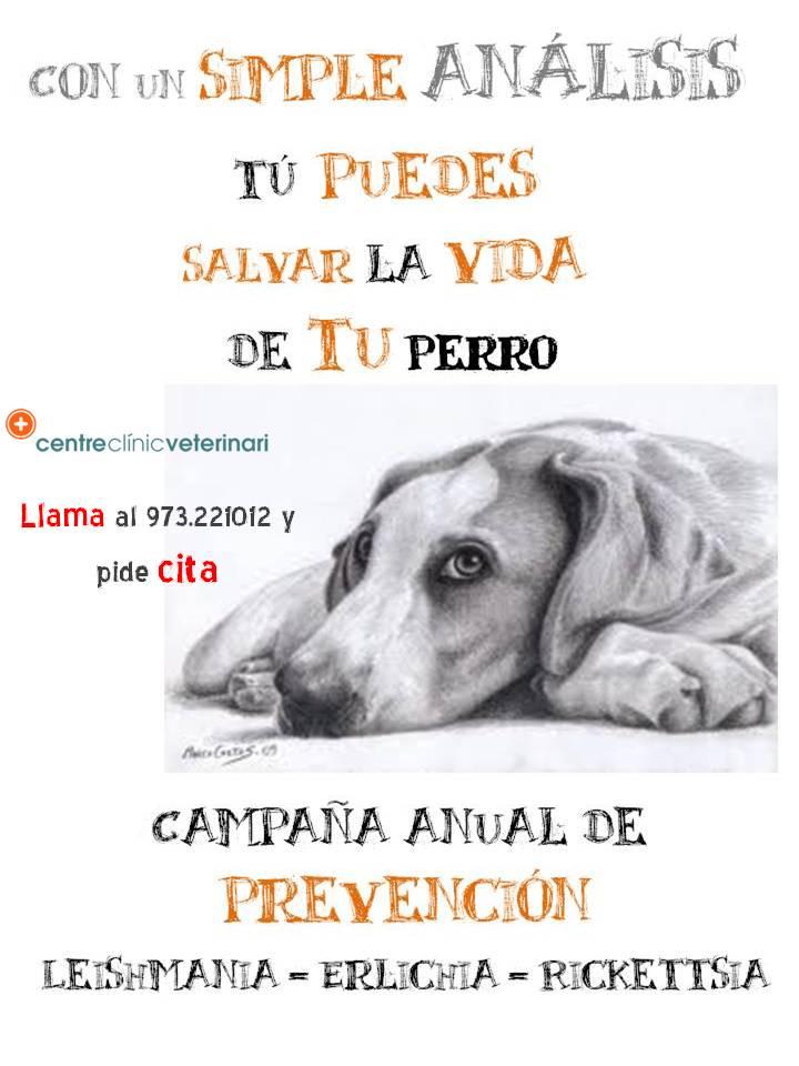 Campaña anual de prevención frente a Leishmania y otros ectoparásitos.Campanya anual de prevenció enfront a Leishmania i altres ectopàrasits